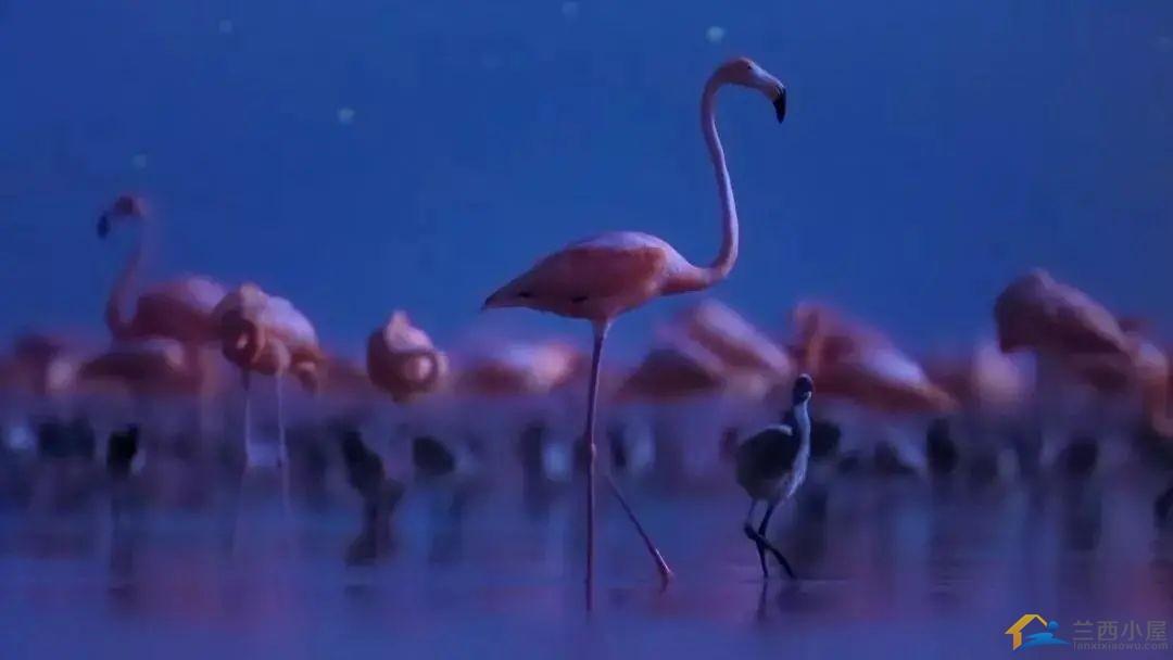 """16部超赞自然纪录片,让孩子足不出户看到地球的""""真实面目""""!-33.jpg"""