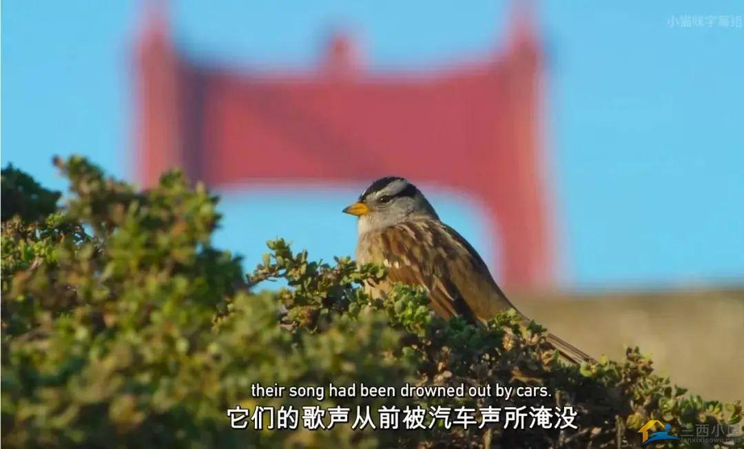 """16部超赞自然纪录片,让孩子足不出户看到地球的""""真实面目""""!-53.jpg"""